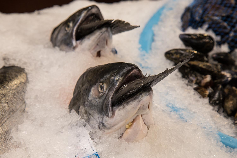 1431-fish-on-ice-no-WM
